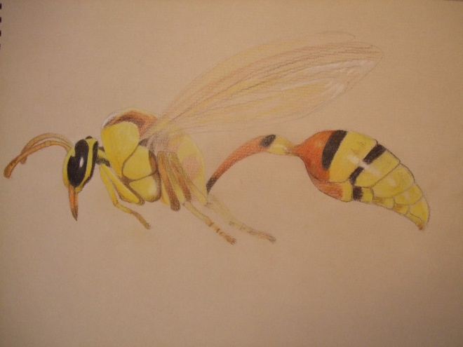 Potter wasp (unfinished) - Faber Castell Polychromos