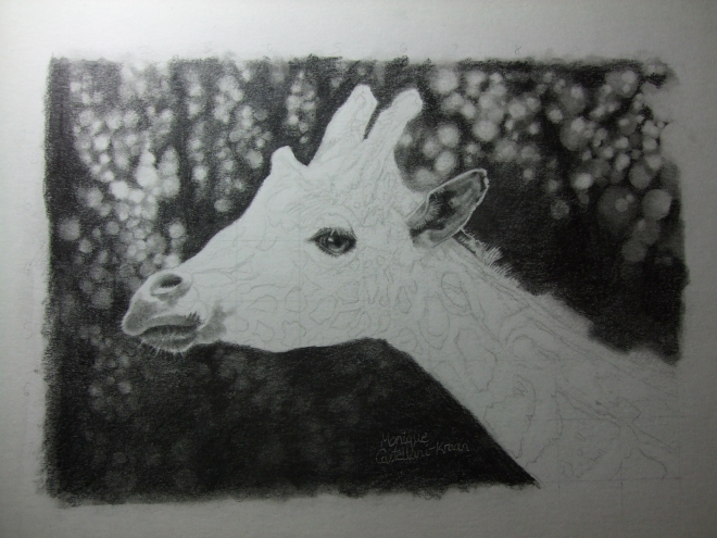 Current work in progress. Giraffes are one of my favourite animals.  Graphite on hot-pressed Daler Rowney Aquafine paper, 21cm x 13cm. Not a very good photo because it's dark outside, sorry xD Reference provided by the wonderful wildlifereferencephotos.com