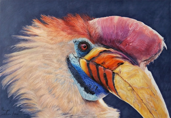 Hornbill Portrait in Coloured Pencil