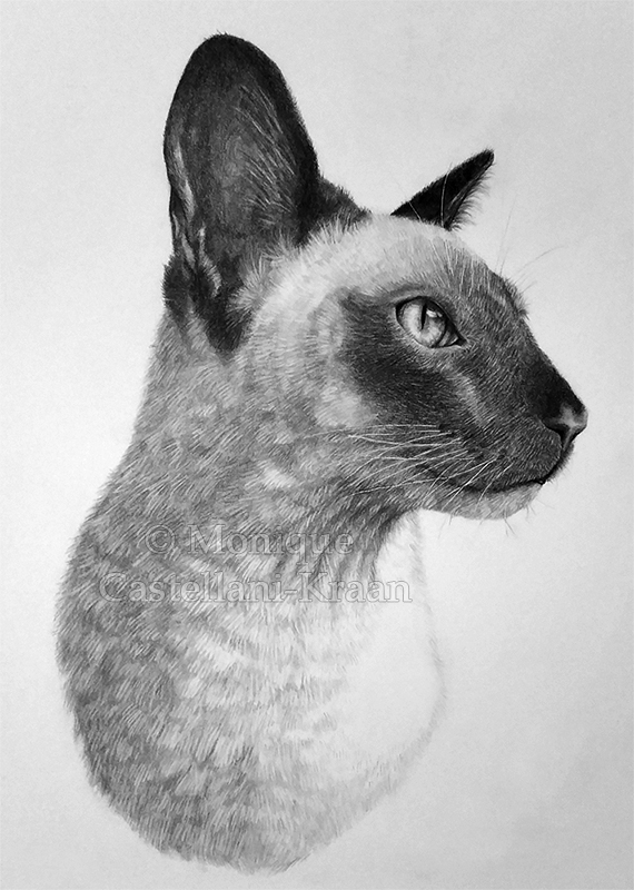 Portrait of Toto, my siamese cat. 27 x 33cm, Graphite on Strathmore 300 Bristol Vellum.