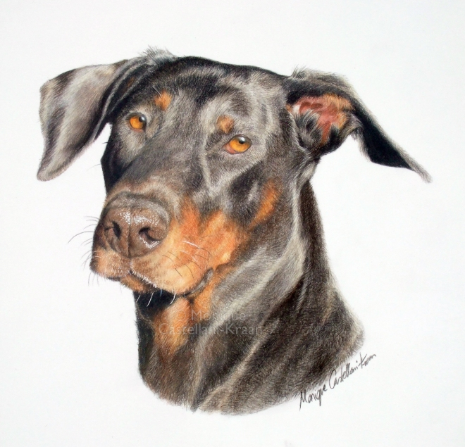 Rottweiler Portrait Commission
